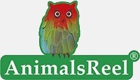 AnimalsReel - Official Site - Animals stock footage on green screen. Ultra-High quality for Cinema, TV and Media